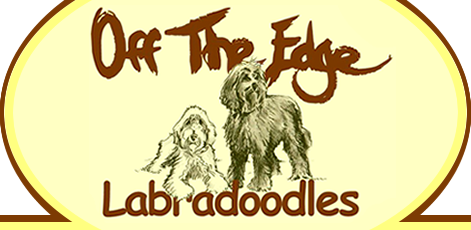 off the edge labradoodles