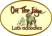 offtheedge labradoodles